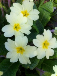 Spring flowers tell of rebirth and summers eves