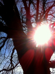 Trees hold awesome energy