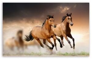 horses_running_2-t2