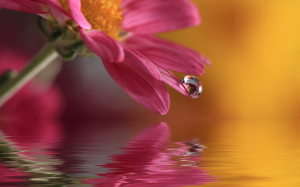 water droplets flower