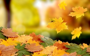 7004503-falling-leaves-autumn