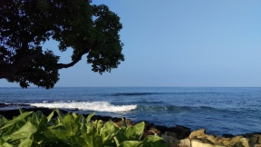 I sat under this tree looking out over the yellow tang fish foraging under the waves