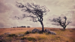 dried-trees-in-the-deserts-wind-1920x1080-wide-wallpapers-net