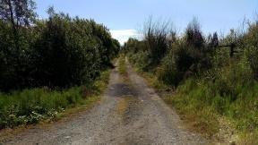 Bog tracks