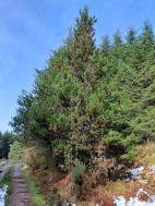 "Maritime pine heals ""I want to feel better"""
