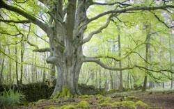 portumna-forest-park-1