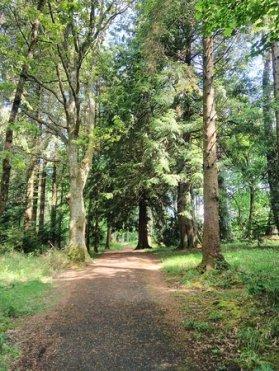 portumna-forest-park
